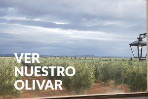 aove olivar palacio de los olivos